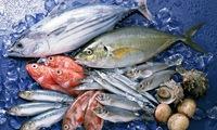3 doanh nghiệp thủy sản ATA, ACL, AAM lãi tăng trưởng trong quý 2/2014