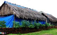 Thu nhập nửa tỷ mỗi năm nhờ trồng nấm
