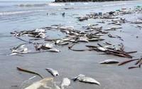 """""""Công bố nguyên nhân cá chết, Chính phủ đã hành động quyết liệt, kịp thời"""""""
