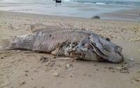 Hội nghề cá đề nghị sớm công bố nguyên nhân cá chết