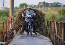 Cây cầu tử thần ở Hà Nội