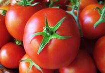 Giá cà chua giảm mạnh
