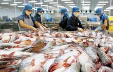 Xuất khẩu cá tra có thể vượt 2 tỷ USD
