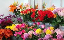Cận 20/10, hoa tươi tăng chóng mặt giá gấp 2-3 lần ngày thường nhưng vẫn cháy hàng