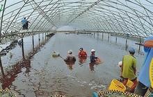 Giá tôm tăng, Việt Nam đẩy mạnh nuôi tôm có kiểm soát