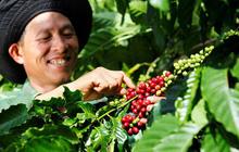 """Cà phê pha phin nguyên chất: """"Át chủ bài"""" mới trong cuộc chiến giành thị phần"""