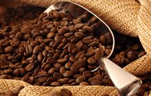 Xuất khẩu cà phê mang về gần 3 tỷ USD trong 10 tháng đầu năm