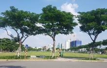 Đà Nẵng lên tiếng vụ hủy kết quả đấu giá khu đất 700 tỷ