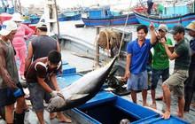 Xuất khẩu cá ngừ sang Hà Lan sẽ tiếp tục tăng tốt