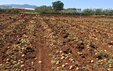 PepsiCo và mô hình nông nghiệp bền vững tại Việt Nam