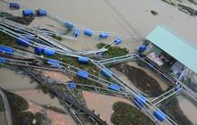 Người dân Quảng Nam chua xót nhìn 60 tấn cá bị lũ cuốn trôi