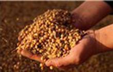 Tổng thống Trump: Trung Quốc đặt mua đơn hàng đậu nành khổng lồ từ Mỹ
