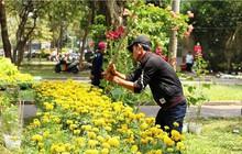 Đập nát hoa để không bị ép giá: 'Vùi dập cái đẹp bằng sự tức giận'