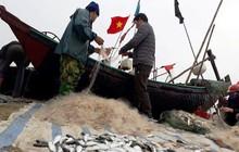 """Ngư dân Sầm Sơn trúng đậm """"lộc biển"""" ngày đầu năm mới"""