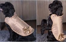 Chiếc áo khoác cho thú cưng đắt nhất thế giới, giá hơn 3 tỷ đồng có gì đặc biệt?
