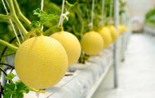 Cổ đông ngoại hưởng trái ngọt sau 3 năm đầu tư vào PAN