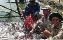 """Infographic: Mỹ áp thuế """"khủng"""", DN cá tra Việt lo mất thị trường"""