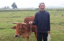 Nông dân Thanh Hóa phải đóng 'thuế' cỏ để được chăn trâu bò