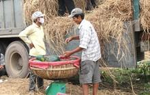 Xuất khẩu dưa hấu: Những thách thức phải vượt qua