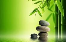 """3 bài học đáng suy ngẫm về thành công mà tôi học được từ """"cuộc đời của cây tre"""""""