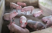 Việt Nam có thể sản xuất 2,8 triệu tấn thịt lợn trong năm 2018