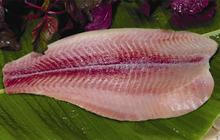 Khai sai hàng loạt thông tin trên BCTC, Agifish bị phạt nặng