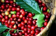 Thị trường cà phê thế giới xuất hiện sức mua ở vùng giá thấp
