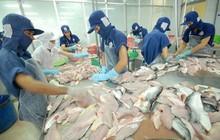 3 rào cản lớn của xuất khẩu cá tra trong năm 2018
