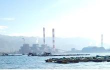 Cá chết hàng loạt ở khu vực nuôi cá lồng bè gần Nhiệt điện Vĩnh Tân