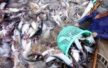 Thực hiện nghiêm khai thác và truy xuất nguồn gốc thủy sản