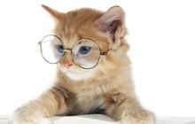 Bài học kinh doanh: Ngủ, kiên nhẫn và thư giãn như... loài mèo