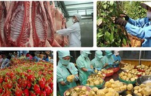 """Nhiều """"nút thắt"""" xuất khẩu nông sản Việt đang dần được tháo gỡ"""