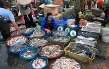 Thí điểm đấu giá hải sản tại chợ cá lớn nhất miền Trung