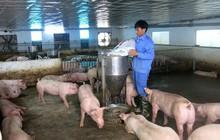 Thịt lợn ổn định trở lại, doanh thu quý 2 của Dabaco gấp rưỡi cùng kỳ, báo lãi 83 tỷ
