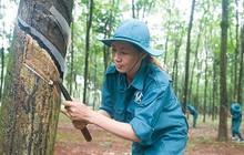 Cao su Đồng Phú (DPR) chốt danh sách cổ đông tạm ứng 20% cổ tức bằng tiền