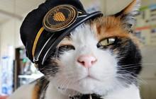 """Tama: Từ con mèo hoang đến """"trưởng ga tàu"""" nổi tiếng nhất cả nước, biểu tượng văn hóa đáng tự hào của Nhật Bản"""