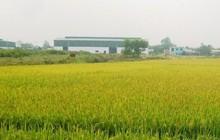 Bắc Ninh chuyển mục đích sử dụng 23 ha đất trồng lúa sang đất phi nông nghiệp