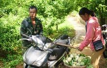 Nông dân thu tiền tỉ từ trồng na