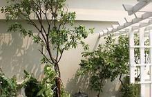 Căn hộ tầng 7 tận dụng khoảng không làm vườn treo