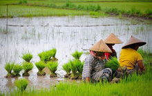 Việt Nam và 7 nước ASEAN có nền kinh tế mới nổi vượt trội nhất thế giới