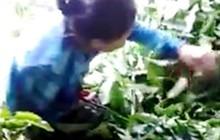 Lâm Đồng: Giao lực lượng chức năng làm rõ thông tin mua lá cà phê tươi 50.000 đồng/kg