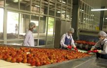 Chỉ 9% rau quả được chế biến