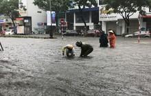 Ngập sâu ở Đà Nẵng: Ô tô chết máy hàng loạt, CSGT đằm mình giải cứu