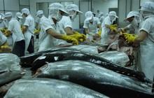 Xuất khẩu cá ngừ vượt mốc 500 triệu USD trong năm 2018