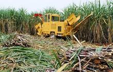 Mía đường Sơn La (SLS) báo lãi ròng quý 1 giảm sút 36% so với cùng kỳ
