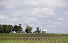 Những hoài nghi về cam kết mua thêm nông sản Mỹ của Trung Quốc