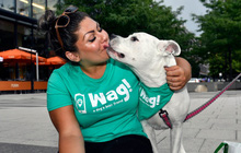 SoftBank tháo chạy khỏi startup dắt chó đi dạo Wag?