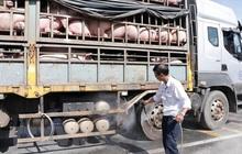 Ngăn chặn tình trạng buôn lợn qua biên giới Việt - Lào