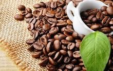 Xuất khẩu cà phê tiếp tục giảm cả lượng và trị giá so với cùng kỳ