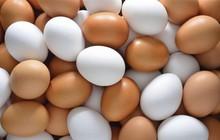 Trứng gia cầm tăng giá mạnh trở lại, người chăn nuôi phấn khởi